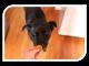 dog taste tester