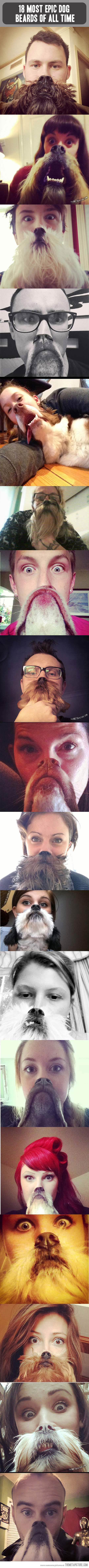 DOG BEARDS! (Image from thematapicture)